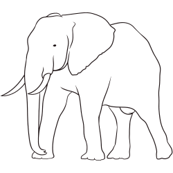 Simple elephant coloring